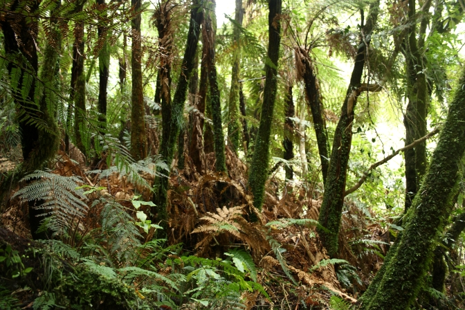 Day Trips for the Uninspired: Apiti Glow Worm Cave: Limestone Creek Reserve, Manawatu Region