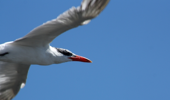 Day Trips for the Uninspired: Waikanae Estuary Scientific Reserve: Wellington/Kapiti Region