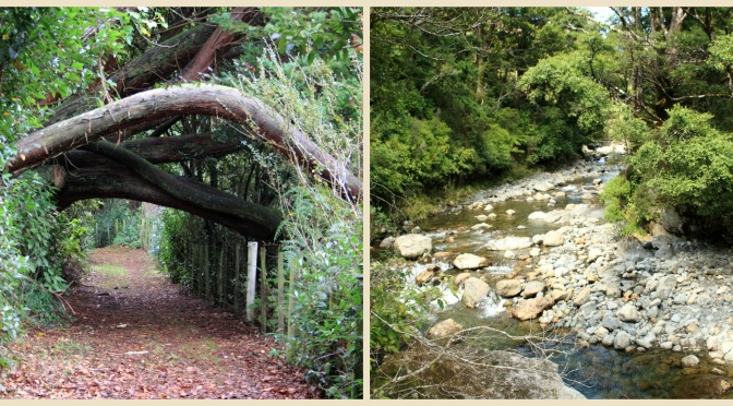Day Trips for the Uninspired: Eketahuna Cliff Walk &  Tararua Forest Park Eketahuna, Tararua District, Manawatu Region