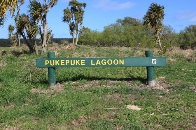 Day Trips for the Uninspired: Pukepuke Lagoon, Conservation Area, Manawatu District, Manawatu Region