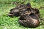 Ducks taking a break