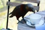 "Kaka ""Anyone for Coffee"""