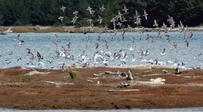 Day Trips for the Uninspired: Manawatu Estuary and Foxton Beach, Horowhenua District, Manawatu Region