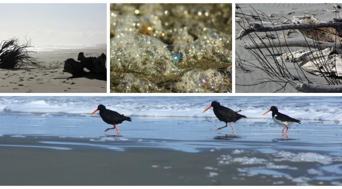Day Trips for the Uninspired: Waitarere Beach & Levin Adventure Park, Levin, Horowhenua District, Manawatu Region