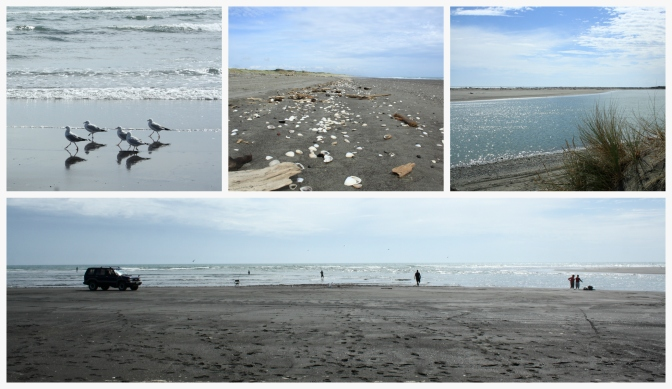 Day Trips for the Uninspired: Tangimoana Beach and Tawhirihoe Scientific Reserve, Manawatu District, Manawatu Region