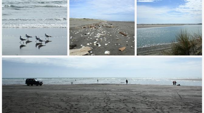 Day Trips for the Uninspired: Tangimoana Beach and Tawhirihoe Scientific Reserve, Manawatu District, Manawatu Region