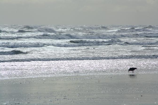 Day Trips for the Uninspired: Hokio Beach, Levin, Horowhenua District, Manawatu Region