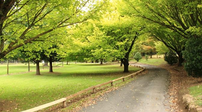 Welcome To Day Trips for the Uninspired: Covering, Manawatu, Palmerston North, Tararua, Wairarapa, Wellington and Hawke's Bay Regions