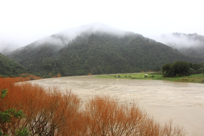 Day Trips for the Uninspired:The Mighty Manawatu River Floods, views from the Balance Bridge and Woodville Ferry Reserve June 20th & 21st 2015