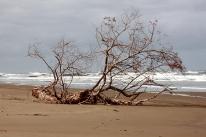 Riversdale beach