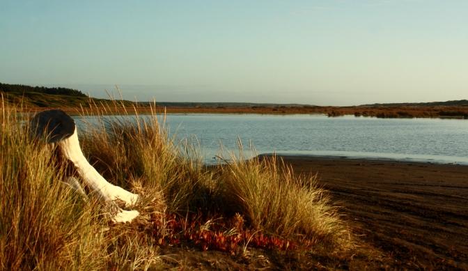 Day Trips for the Uninspired: Scotts Ferry, Manawatu-Whanganui region