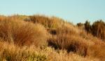 Dune grasses & plants